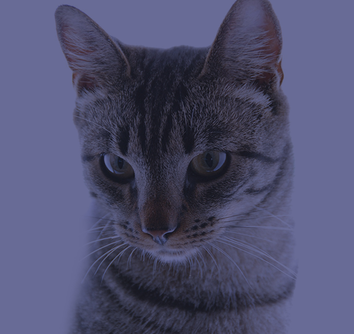 gato-home.jpg