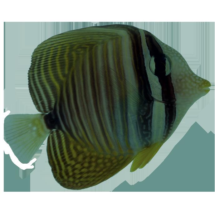 peixe-banner.png